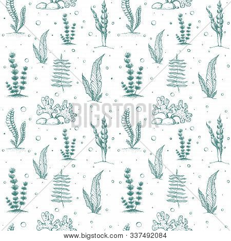 Seamless Seaweed Pattern Isolated. Vintage Background With Engraved Seaweeds, Corals And Reef. Under