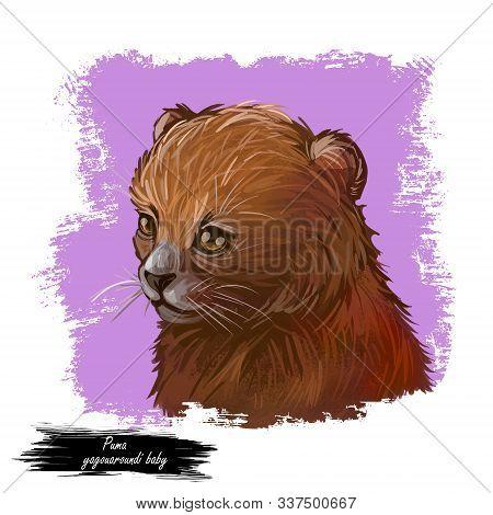 Puma Baby Tabby, Herpailurus Yagouaroundi Portrait Of Animal. Watercolor Drawing Of Puma. Eyra Profi