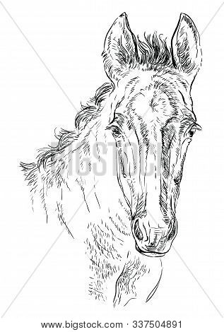 Cute Pony Foal Portrait. Young Pony Head In Black Color Isolated On White Background. Vector Hand Dr