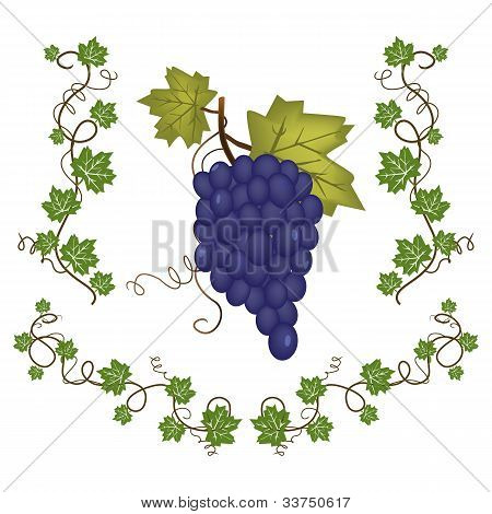 Grape cluster with green leafs