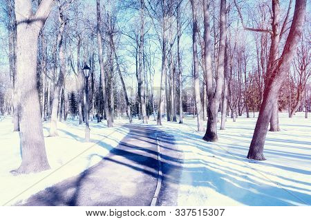 Winter landscape, snowy winter trees and alley in the winter park. Winter snowy morning scene. Colorful winter background