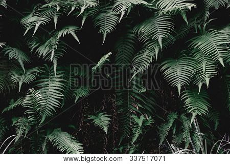 Abstract Green Leaves Texture, Nature Background And Wallpaper