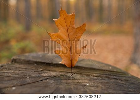Old Stub In Autumn Park With Yellow Fallen Leaf. Wood Stub At The Meadow With Blurred Autumnal Fores