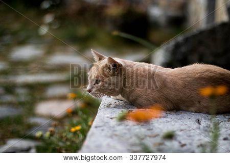 Gato Aburrido De Color Naranja En Busdongo