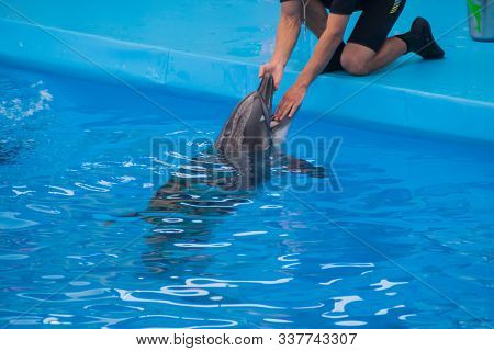 Veterinarian Examines A Trained Dolphin. A Young White Male Vet Put His Hand In The Mouth Of A Dolph