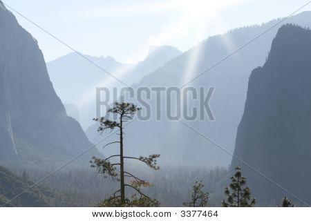 Tree In Sunlit Valley