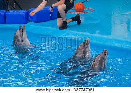 Trained Dolphin In The Aquarium, Dolphinariums. Show With Dolphins. The Trainer Works With A Trained