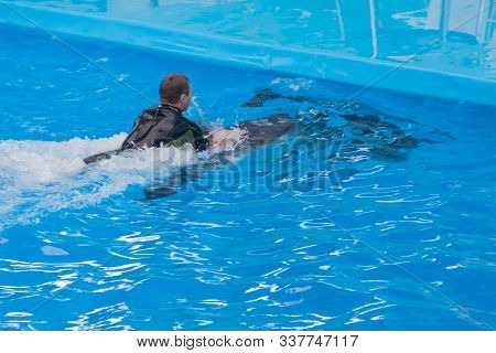 Young White Man In A Wetsuit Is Swimming On A Dolphin In The Pool. Swimming With Wild Sea Animals, W