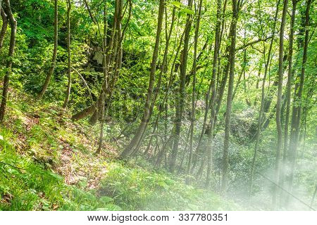 Morning Fog In A Green Forest On A Mountainside. Foggy Morning In Dense Mountain Forest. Deciduous F