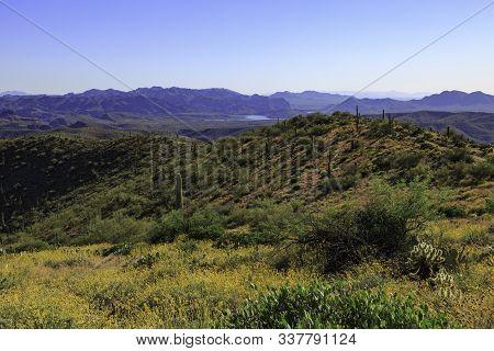 Sonoran Desert Near Phoenix Arizona With Saguaro Cacti And The Superstition Mountains And Saguaro La