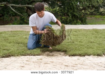Young Worker Laying Sod