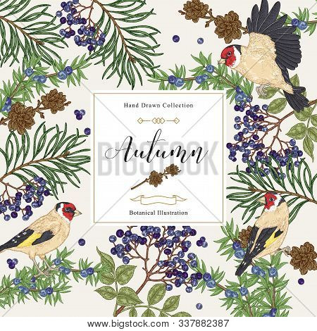 Autumn Background With Birds And Tree Branches. Pine, Elderberry, Juniper Branches And Finches. Hand