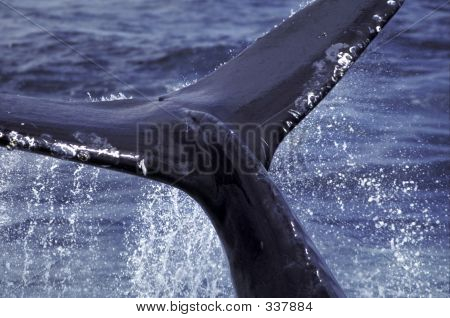 Whale Tail # 2