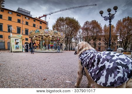 Lucca, Italia - 24 Novembre 2019: Unknown People With Dressed Dog And Carousel For Children In Piazz