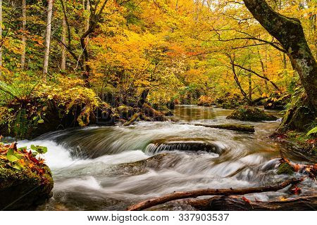 View Of Oirase Stream Flow Rapidly Over The Rocks In The Beautiful Forest Of Colorful Foliage Of Aut
