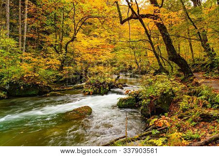 Beautiful Oirase Stream Flow Along The Oirase Walking Trail Pass Through The Colorful Foliage Forest