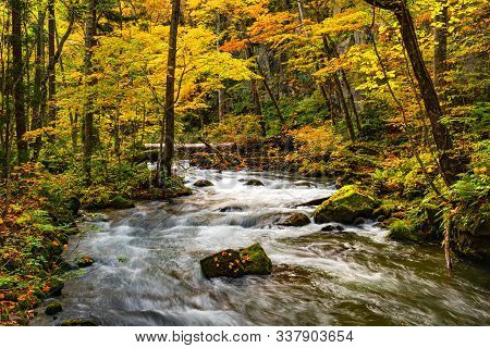 Beautiful Oirase Mountain Stream Flow Over Rocks In The Colorful Foliage Of Autumn Forest At Oirase