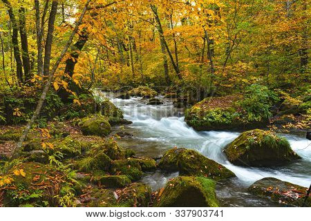 Oirase River Flow Passing Rocks Covered With Green Moss And Colorful Falling Leaves In The Beautiful