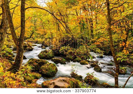 View Of Oirase Mountain Stream Flow Rapidly Through The Colorful Foliage Of Autumn Forest At Oirase
