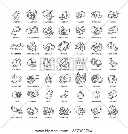 Fresh And Natural Ingredients. Thin Line Web Icon Set.