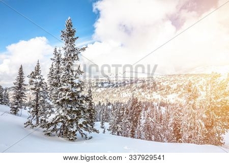 Winter Mountain Landscape. Sunny Day. Coniferous Taiga Under Fresh White Snow Against A Background O