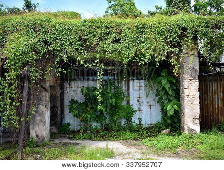 Old Abandoned Shopfront Being Overrun By Nature In Penang, Malaysia