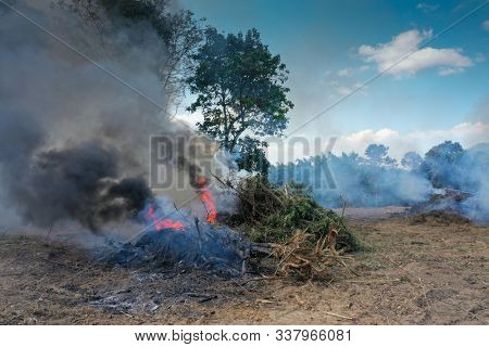 Deforestation and fire. Rainforest is cut down and burned to make way for agricultural land