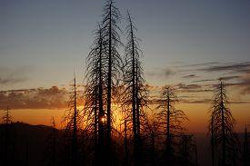 Yosemite Forest Fire Damge Viewed At Sunset, Yosemite National Park