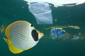 Fish in polluted ocean with plastic bags