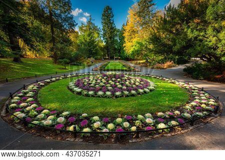 Blooming colorful cabbage in the Oliwa Park in autumn, Gdansk. This is a public park.