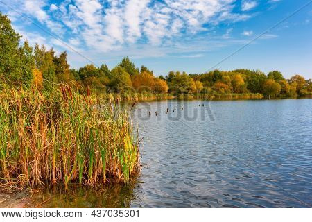 Beautiful pond in Gdansk during autumn, Poland