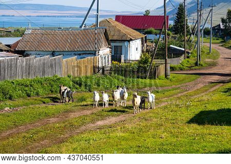 A Picturesque Village By The Lake. A Herd Of Goats Stands On The Road. Country Life With Pets. A Sun