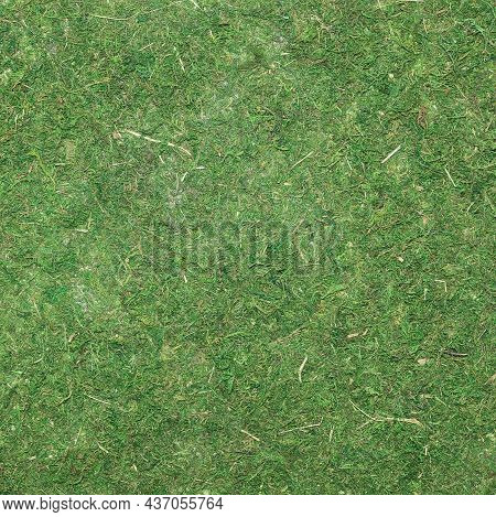 Moss Background Texture. Top View. Green Pressed Dried Moss. Simple Mockup