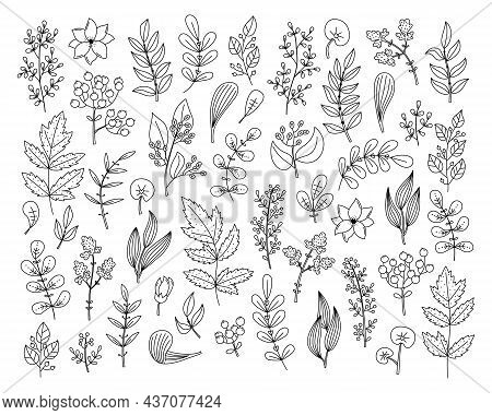 Vector Outline Floral Set With Plants And Flowers