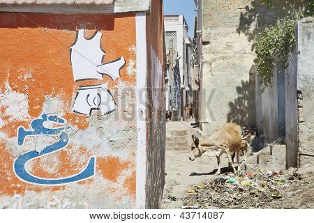 Cows And Dogs Feeding In Back Alley Of Dwarka