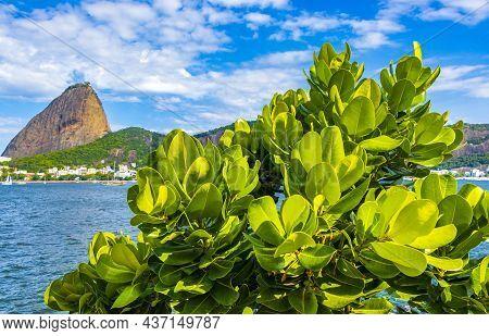 Sugarloaf Mountain Pão De Açucar Panorama Rio De Janeiro Brazil.