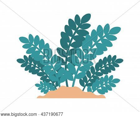Cartoon Plant. Minimalistic Zamioculcas Growing In Sand. Tropical Ficus Greenery. Isolated Foliage E
