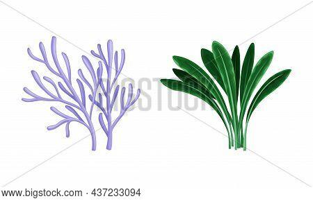 Seaweed And Algae As Aquatic And Marine Plants Growing On Ocean Bottom Vector Set