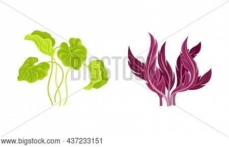Seaweed And Algae As Aquatic And Marine Plants Growing On Ocean Bottom Vector Set.