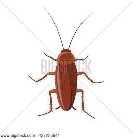 Cockroach Insect Isolated On White Background, Pest Bug Icon Top View. Flat Body Parasite Pollution,