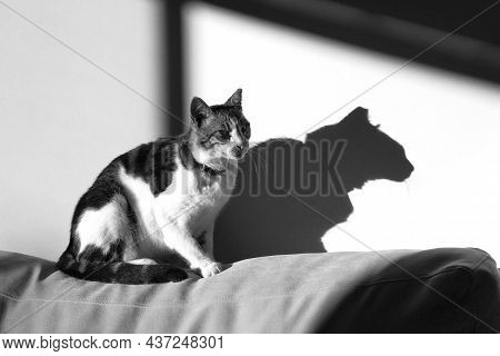 A Tabby Cat Sitting On A Sofa In The Sunlight, Its Shadow On The Adjacent Wall.