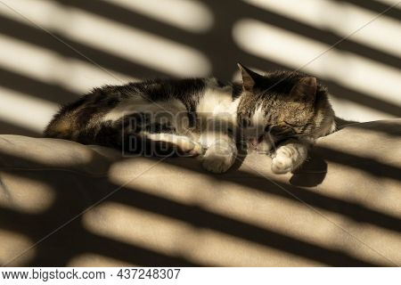 A Tabby Cat Sleeping On A Sofa Backrest, In The Shadow Of The Partially Opened Window Blinds.