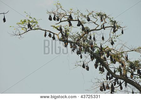 Bats sleeping in a tree