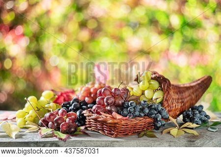 Bunches of grapes on old wooden table and blurred colorful autumn background. Variety of ripe colorful grapes as the symbol of autumn cornucopia or abundance.