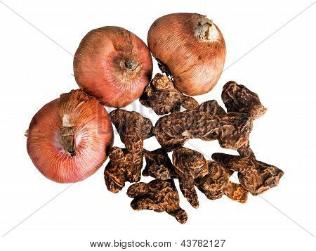 Anemone And Gladiolus Bulbs, Rhizomes For Spring Planting - Isolated Over White Background