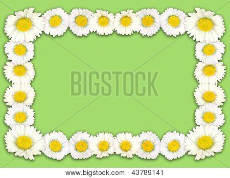 Spring Daisy Border, Frame, Background