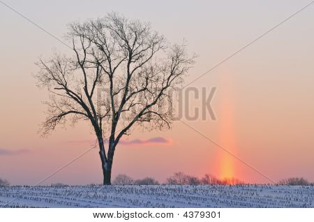 Bare Tree At Dawn