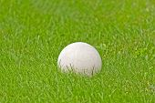 Close-up white soccer ball in lush green grass poster
