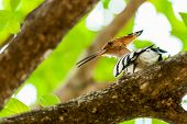 Common Hoopoe Upupa epops bird perched on tree branch sunlight leaves green copy space poster
