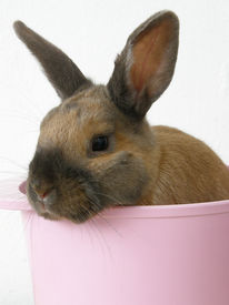 Baby rabbit in a bowl isolated on white
